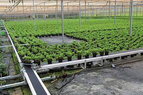 Mobile conveyors for cannabis growers